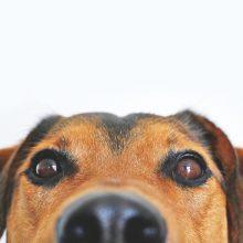 Create a pet trust in your estate plan