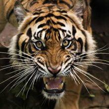 Tiger King Estate Plan